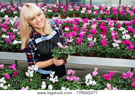 Beautiful woman the seller of a flower shop while working smiling and looking at the camera Holding a potted flower