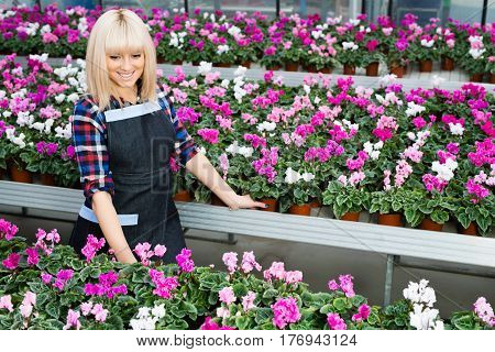 Beautiful woman, seller of flower shop, while working smiling and looking at the camera stands near racks with potted flowers.