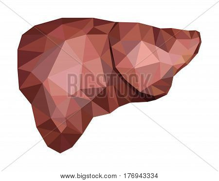 Realistic human liver in low poly. Vector EPS 8.