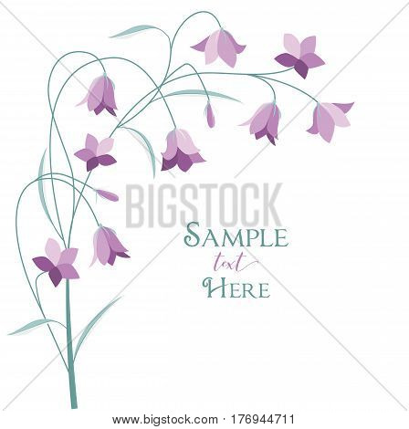 Vector illustration purple bell-shaped bloom, summer flower Campanula