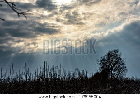 Sunrays shining through cloud cover on single tree