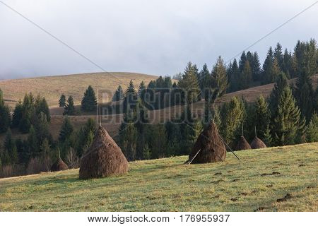 Rural landscape in autumn. Stack dry hay in the field in the mountains. Sunny morning with beautiful fog. Carpathians, Ukraine, Europe
