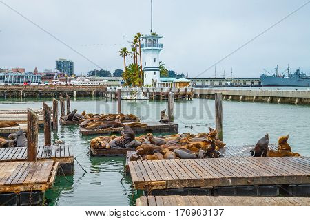 Sea lions at Pier 39 a popular tourist attraction in San Francisco, California, United States. Pier 39 is located at the edge of Fisherman's Wharf district and is close to North Beach and Embarcadero.
