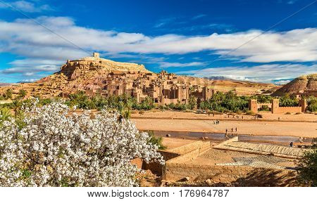 Ait Benhaddou and fruit tree blossoms - Morocco, North Africa