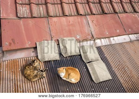 Two cats resting on a roof in Onomichi, Hiroshima
