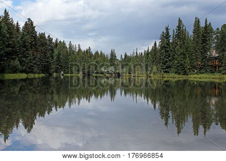 Trees reflecting off a small pond underneath a cloudy sky