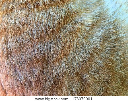 texture of fur hair of black and brown cat