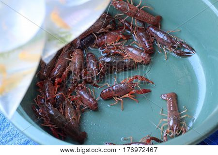 small lobster crustacean fresh in basket sell by street vendor in Indonesia photo