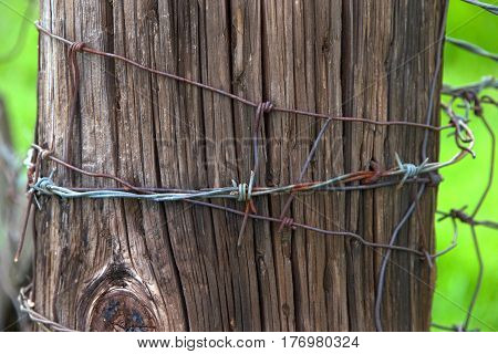 Barbed wire wrapped around an old age and weather cracked wood fence post in a green pasture close up.