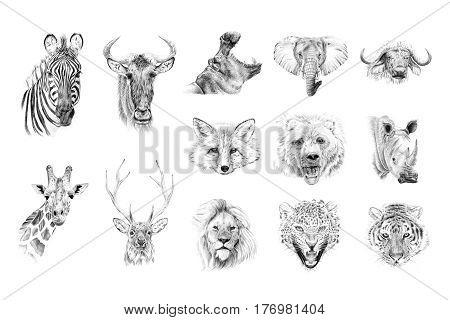 Portrait of animals drawn by hand in pencil. Originals no tracing