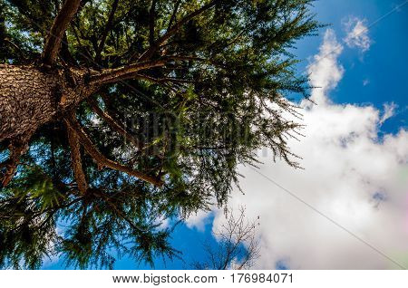 Treetop under the blue summer sky with cloud