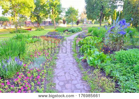Garden with flowerbed and colorful plants at summer.