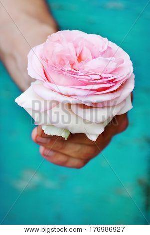 Delicate rose in the hands of brutal men
