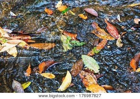leaves of trees in a river