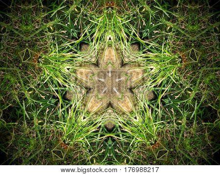 Abstract Fur And Grass Mandala