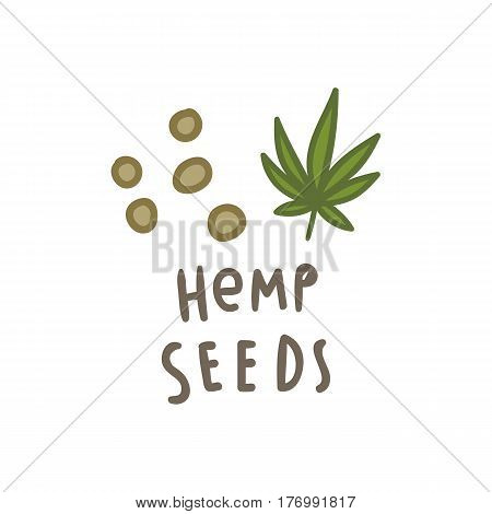 Hemp seeds superfood. Vector hand drawn illustration