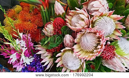 Mix of King Protea and Pincushion flowers displayed at Funchal Market, Madeira