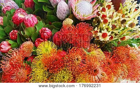 Lots of Orange Pincushion flowers and Mix of King Proteas displayed at Funchal Market, Madeira