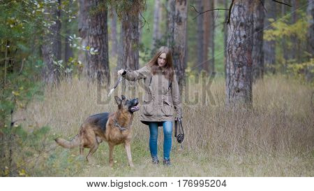 Young woman playing with a shepherd dog in autumn forest - throws a stick, telephoto