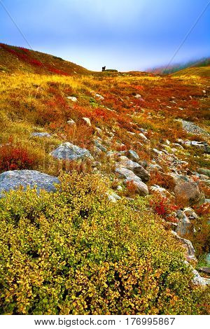 Autumn morning in the mountains. Fog and bushes of red and yellow. Altai Russia.