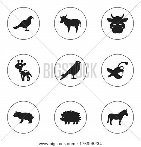Set Of 9 Editable Animal Icons. Includes Symbols Such As Cow, Stallion, Eagle And More. Can Be Used For Web, Mobile, UI And Infographic Design.