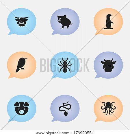 Set Of 9 Editable Zoology Icons. Includes Symbols Such As Bedbug, Serpent, Groundhog And More. Can Be Used For Web, Mobile, UI And Infographic Design.