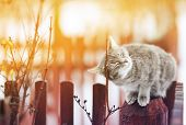 cute cat fondled on the fence his eyes closed from the pleasure in March on a Sunny day poster