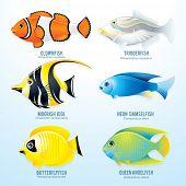 Tropical reef fish collection - detailed vector illustration of Clownfish, Triggerfish, Moorish Idol, Neon Damselfish, Butterflyfish and Angelfish poster