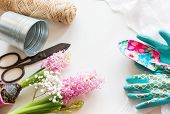 Gardening concept. Still life of seedling hyacinth garden tools scissors twine tubers-bulbs gladiolus with copy space. Top view. Spring background. poster
