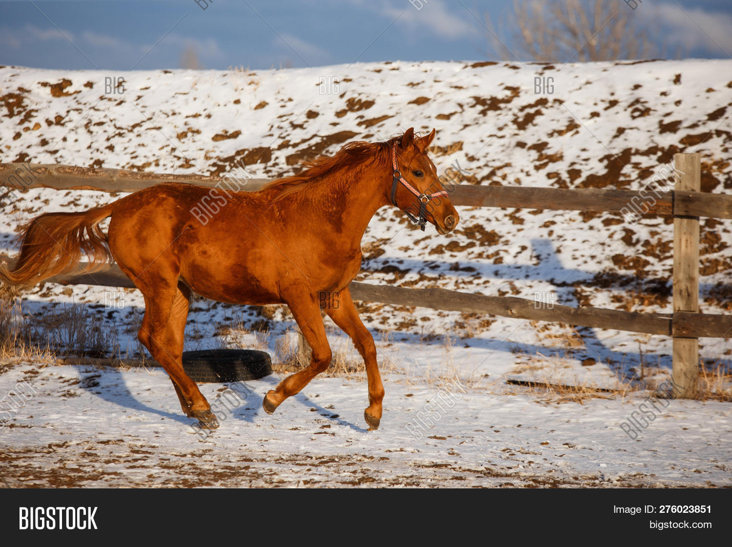 Winter Red Horse Image Photo Free Trial Bigstock