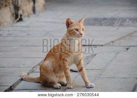 City fauna. Red strolling cat sitting on pavement. Cute animals poster