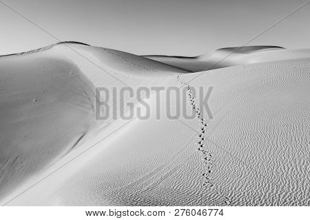 beautiful sand dune in sunrise in the sonoran desert with human footsteps in the sand poster