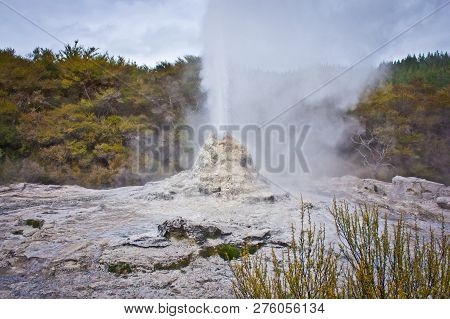 White Geyser In Geothermal Park In New Zealand