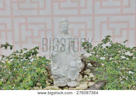 The Bonsai In A Zen Garden At The Flower Show