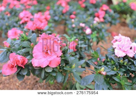 An Urban Flower Bed At Road Side