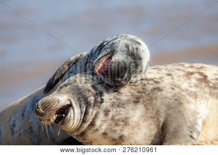 Laughing Out Loud. Funny Animal Meme Image Of Happy Animals Having Fun. Hilarious Wildlife Picture O