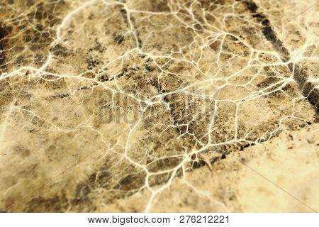 Mine Fungus Mycelium On Old Beam ( Fibroporia Vaillantii Syn Androdia )