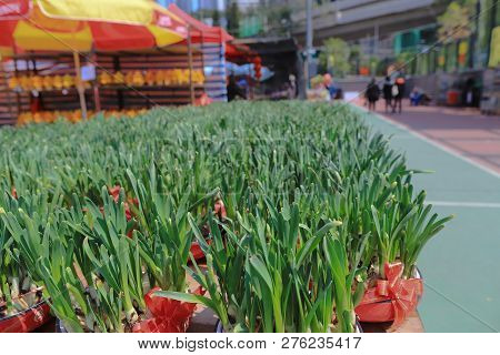 Flower Market During The Chinese New Year.