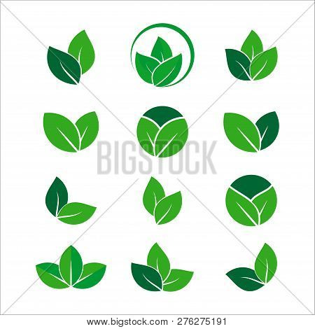 Green Leaf Vector Icons. Spring Leaves Ecology Symbols. Green Leaf And Spring Nature Organic Illustr