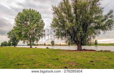 Tall Trees Along The Banks Of The Bergsche Maas, A Dutch River Near The City Of Waalwijk, Noord-brab