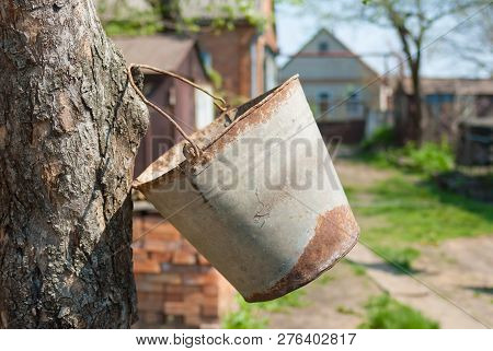 Old Rusty Bucket Hanging With A Handle On A Tree Bough At Spring Season