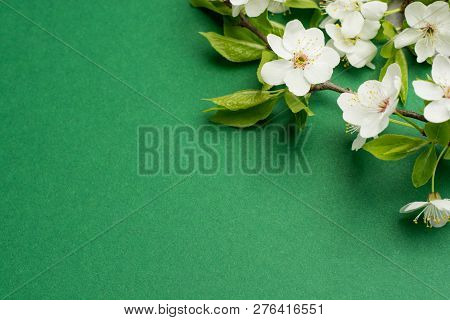 Creative Layout Made With Tree Flowers Blossom On Bright Green Background. Flat Lay. Spring Minimal