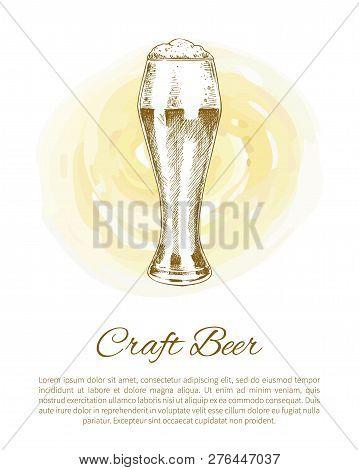 Pilsner Craft Beer Glass Depiction On Color Plash. Refreshment Drink Vector Illustration In Sketch S