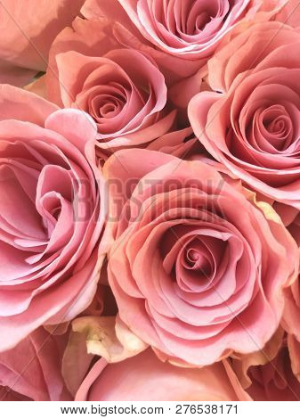 Close Up Photo Of A Bouquet Of Pink Roses In Bloom