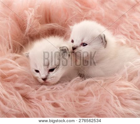 Two white newborn kittens lying on light orange blanket