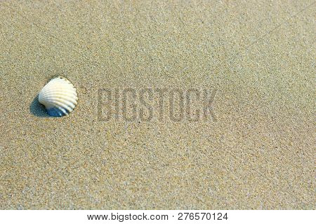 Small White Shell On Sandy Background, Selective Focus