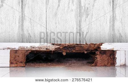 Termite Nest At Wooden Wall, Nest Termite At Wood Decay, Background Of Nest Termite, White Ant, Back