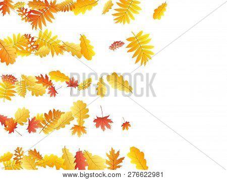 Oak, Maple, Wild Ash Rowan Leaves Vector, Autumn Foliage On White Background. Red Orange Yellow Sorb