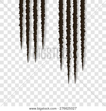 Top Claws Scratches - Vector Isolated. Talons Cuts Animal Cat, Dog, Tiger, Lion, Claws Scratches - V