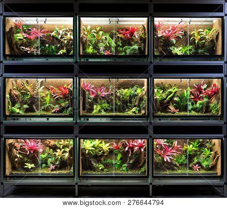 Terrarium rack. A series of nine tropical rain forest vivarium ideal for poison dart frog pet poster